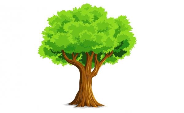 tree-1716991